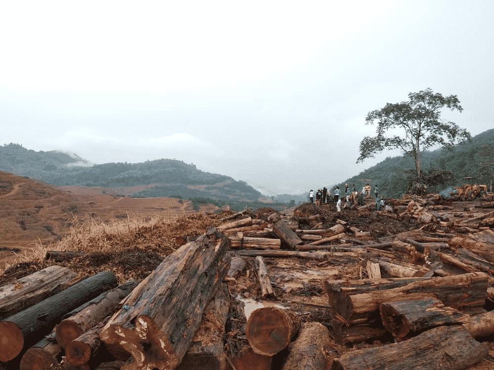 Kelantan wajib komited urus sumber hutan secara lestari, mampan